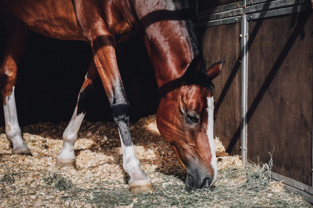 Verhaal over een meisje en haar paard
